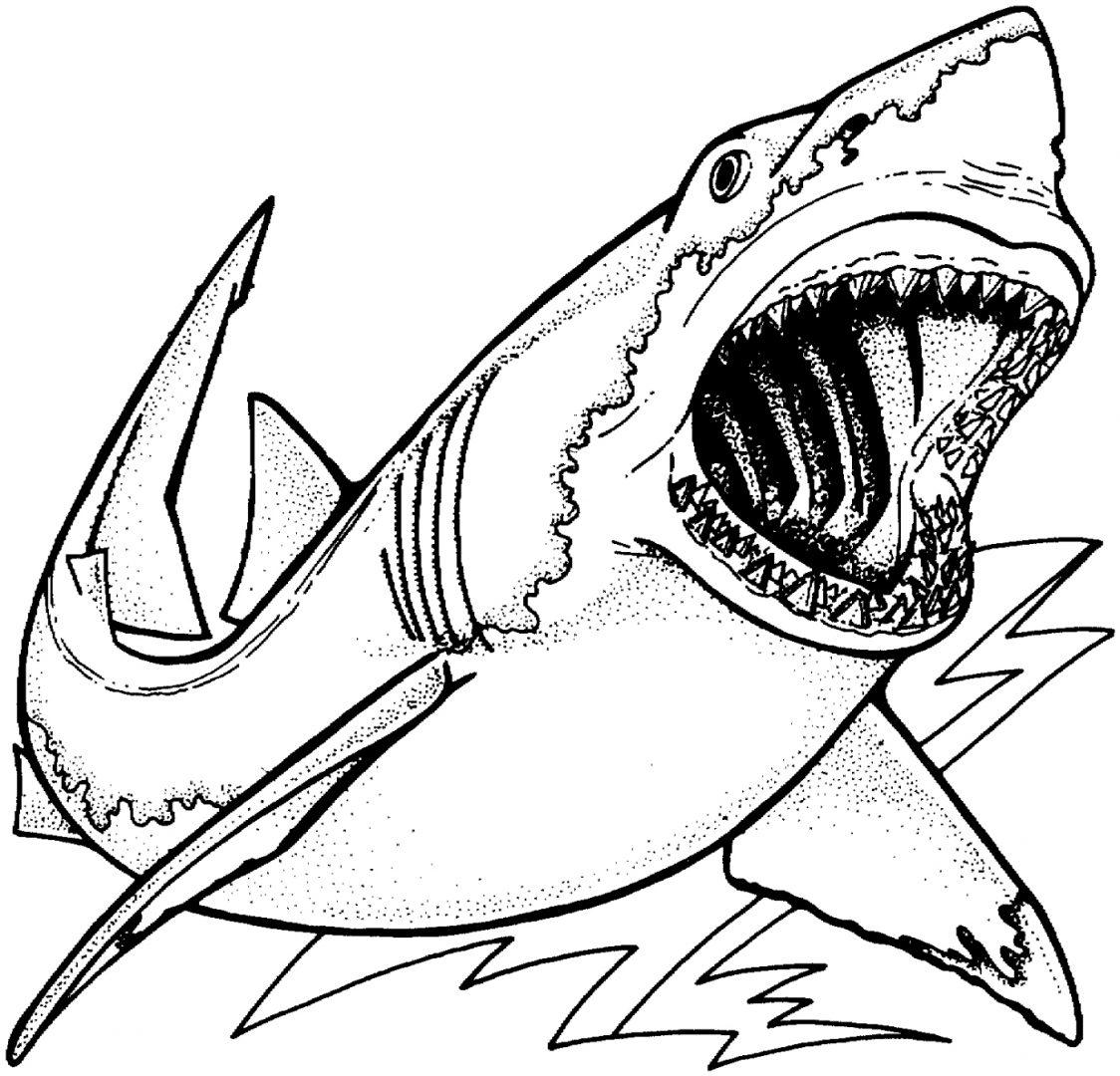 Galería de imágenes: Dibujos de tiburones