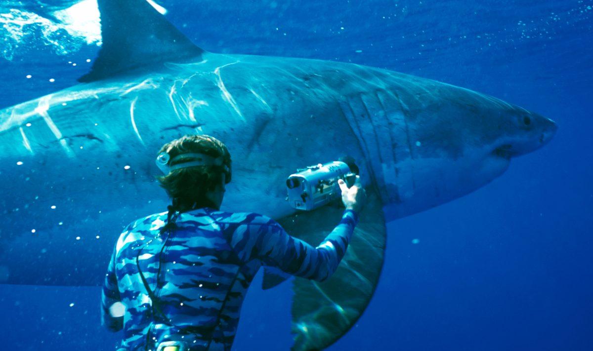 Tiburones en peligro de extinción
