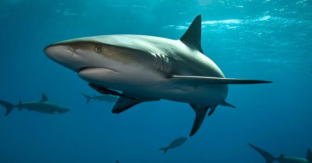 Guía De Los Tiburones :: Imágenes Y Fotos